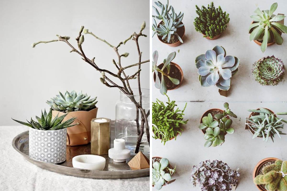 Decoration Avec Plantes Grasses les plantes grasses, must-have de l'été !   madame décore