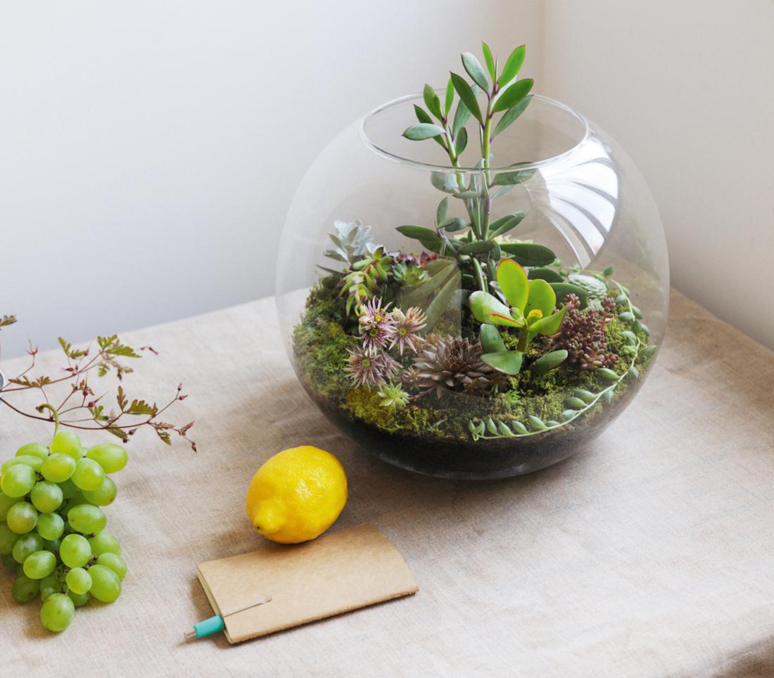 Coup de coeur pour les jardins miniatures madame d core - Plantes pour jardin japonais miniature ...